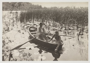 Gathering Water-Lilies, 1886, Peter Henry Emerson © National Media Museum, Bradford SSPL