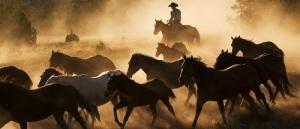wrangler-and-ranch-horses-web