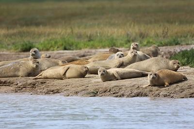 seal-survey-2016-c-zsl-7
